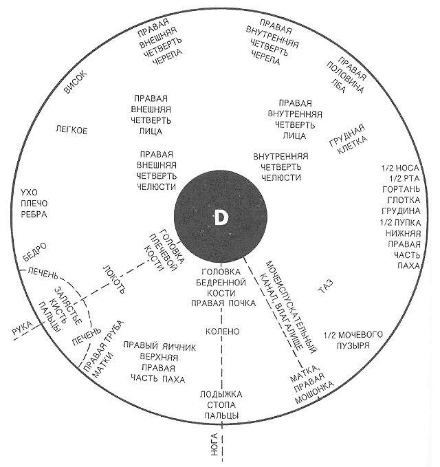 Схема проекционных зон