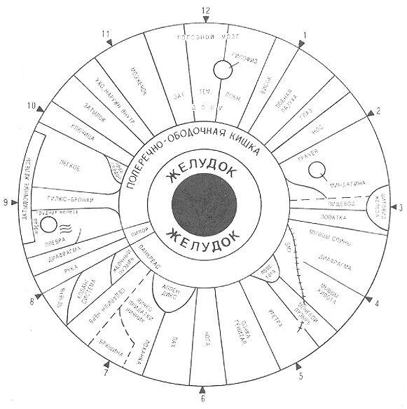 Схема проекционных зон тела